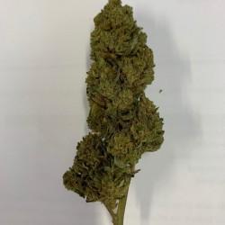 Mango kush - Fleur CBD